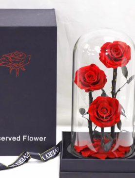 Rosas Preservada Gran Principe
