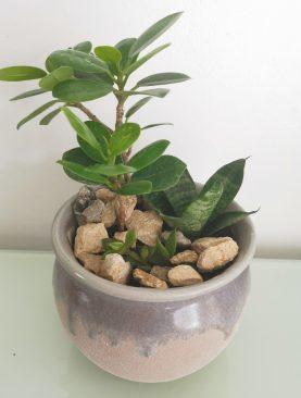 Plantas Mixtas