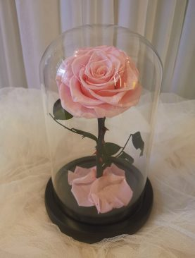 Rosa Preservada Principito rosado