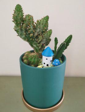 Cactus Mixtas