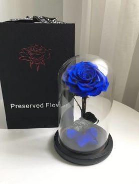 Rosa Preservada Principito azul
