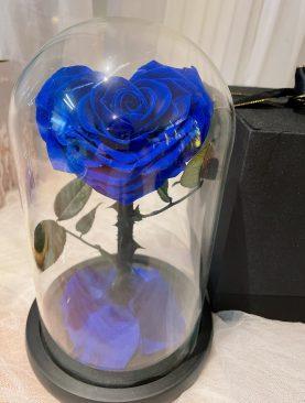Rosa Preservada Principito azul corazon
